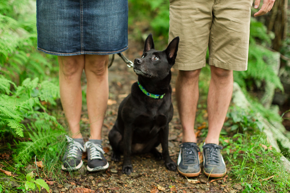 Black mutt rescue dog on the trails at Shenandoah National Park during engagement photos   Best Northern Virginia Dog Photographer