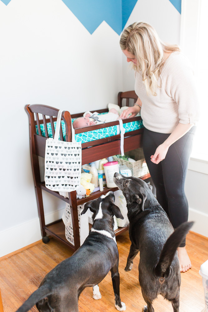 Rescue dogs looking up at the changing table during lifestyle newborn photos