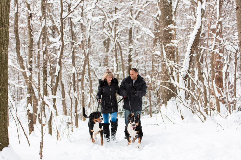 Snow engagement pictures with Greater Swiss Mountain Dogs in Northern Virginia | Winter engagement in Reston, VA