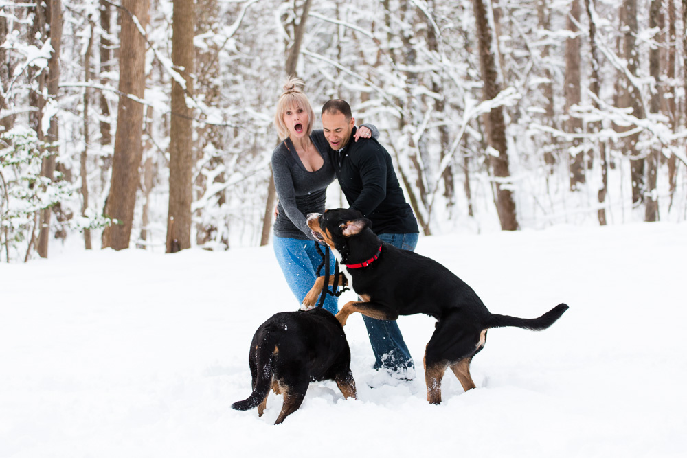 Candid moment as big dogs jump in the snow and surprise their parents | Candid DC engagement photographer