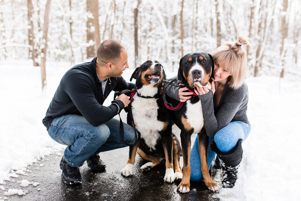 Sweet photo of engaged couple playing with their two dogs in the snow in Northern Virginia