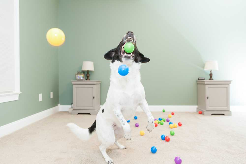 Happy dog playing in a ball pit