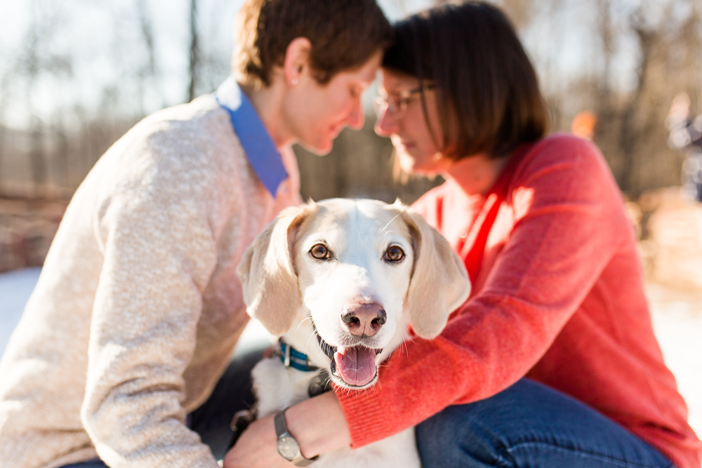 Smiling dog during engagement shoot at Manassas Battlefield | Northern Virginia Dog and Engagement Photographer