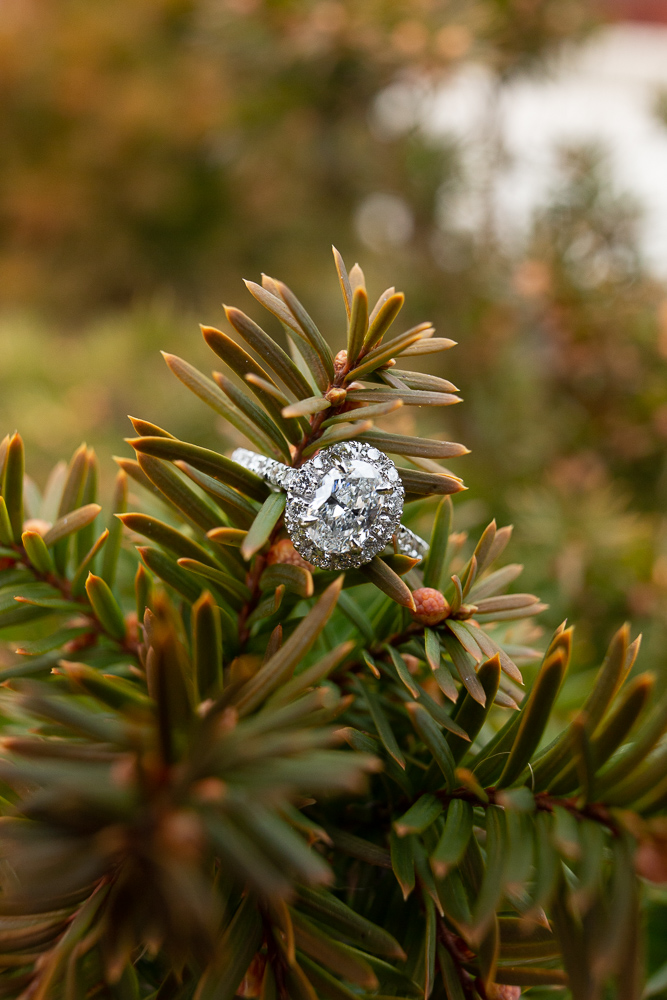 Engagement ring on an evergreen during a Washington DC engagement session