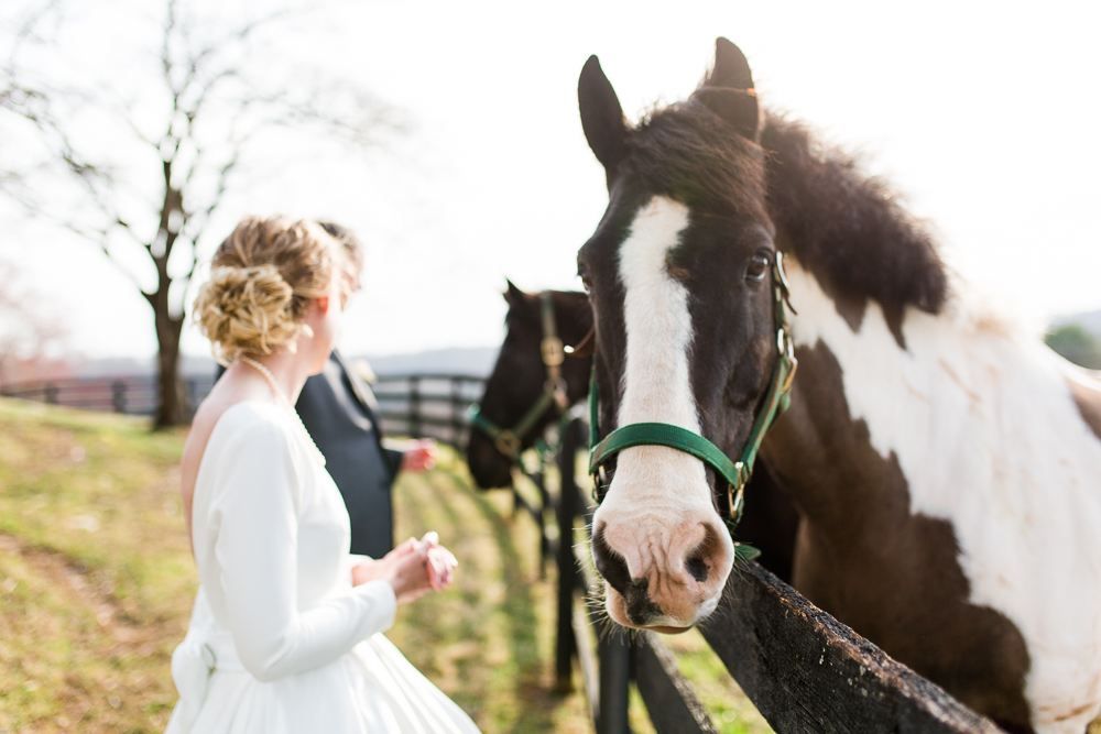 Wedding pictures with horses in Warrenton, Virginia
