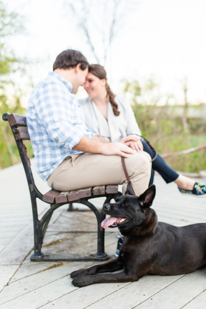 Engagement photo with dog on the boardwalk of Theodore Roosevelt Island