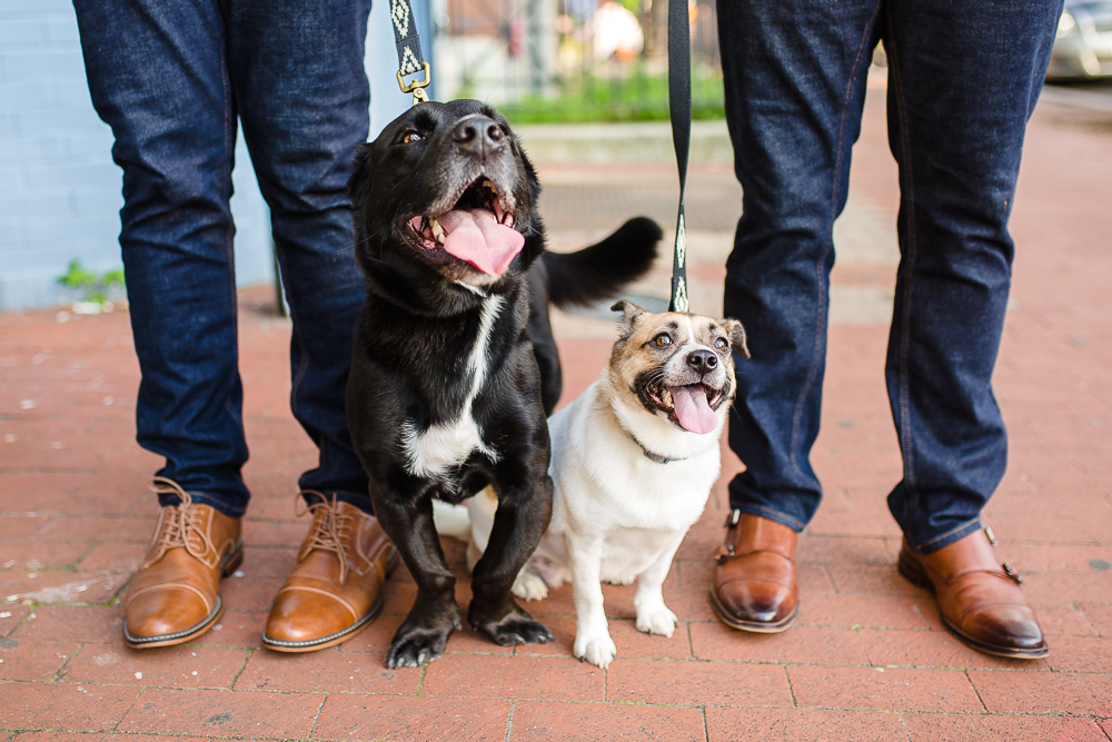 mount-pleasant-dc-engagement-photos-with-dogs-87.jpg