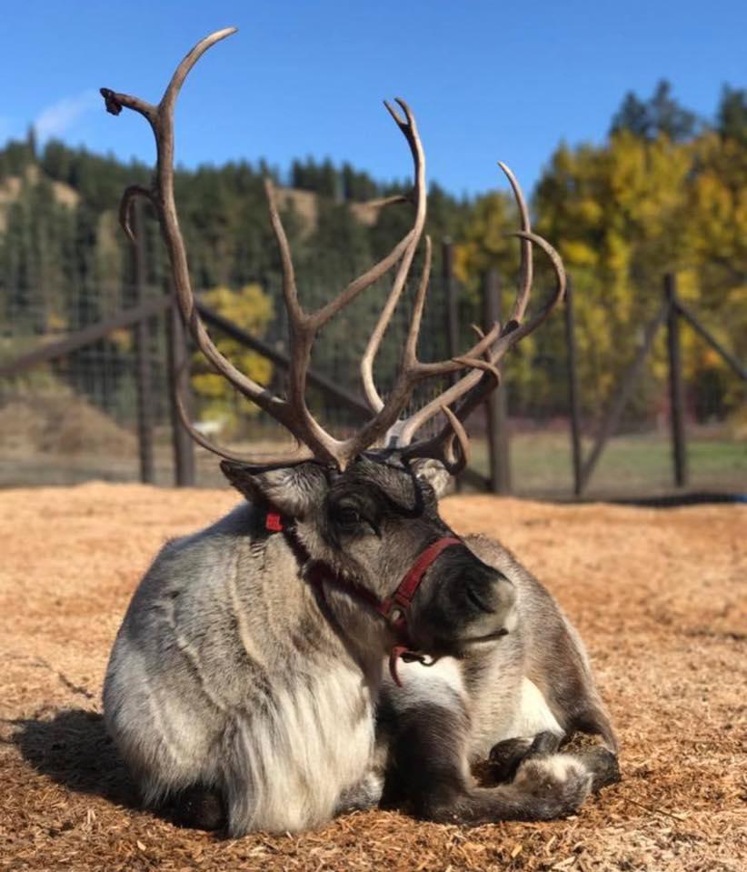 Gallery Leavenworth Reindeer Farm
