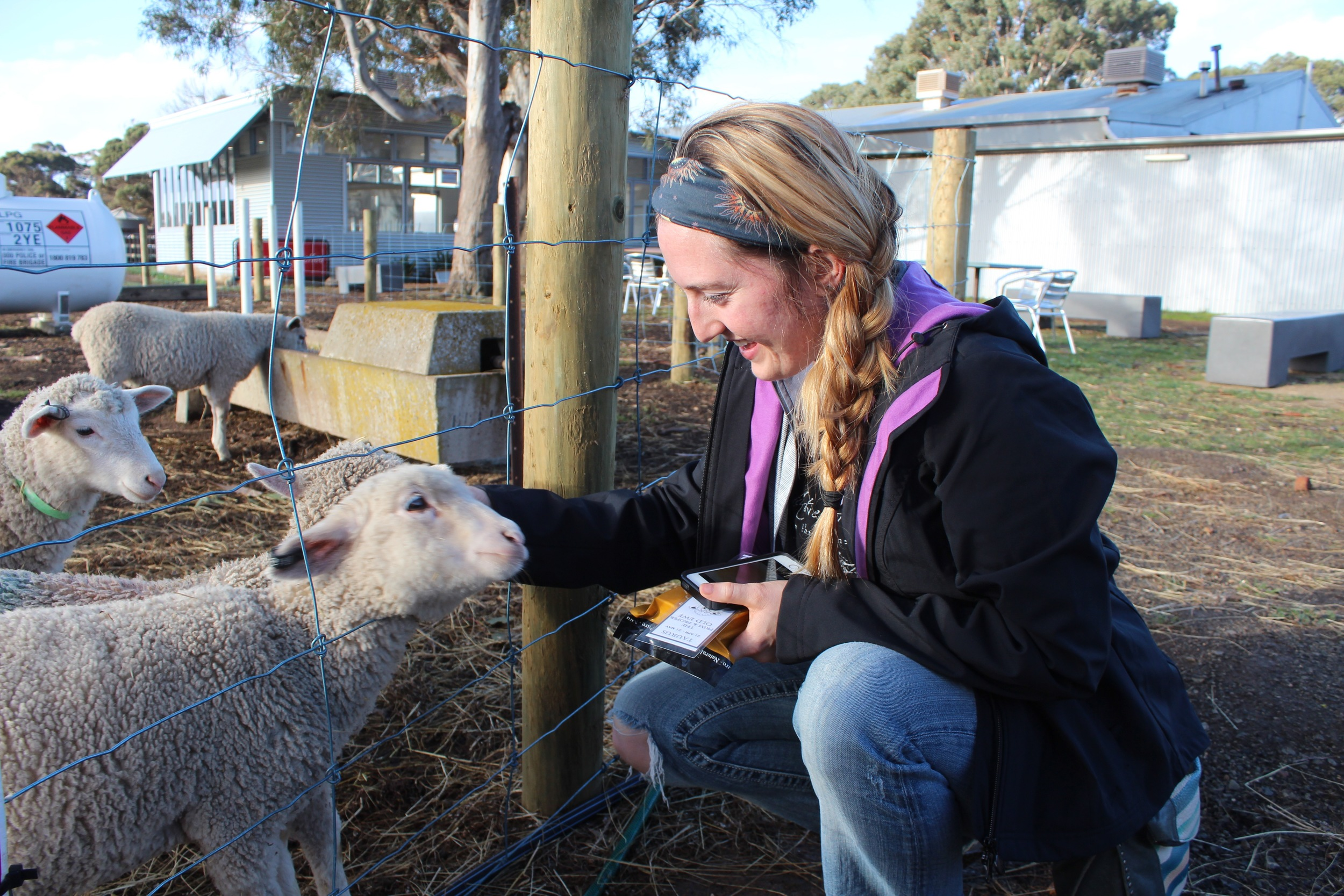 Me petting a sheep at Island Pure Dairy Farm.