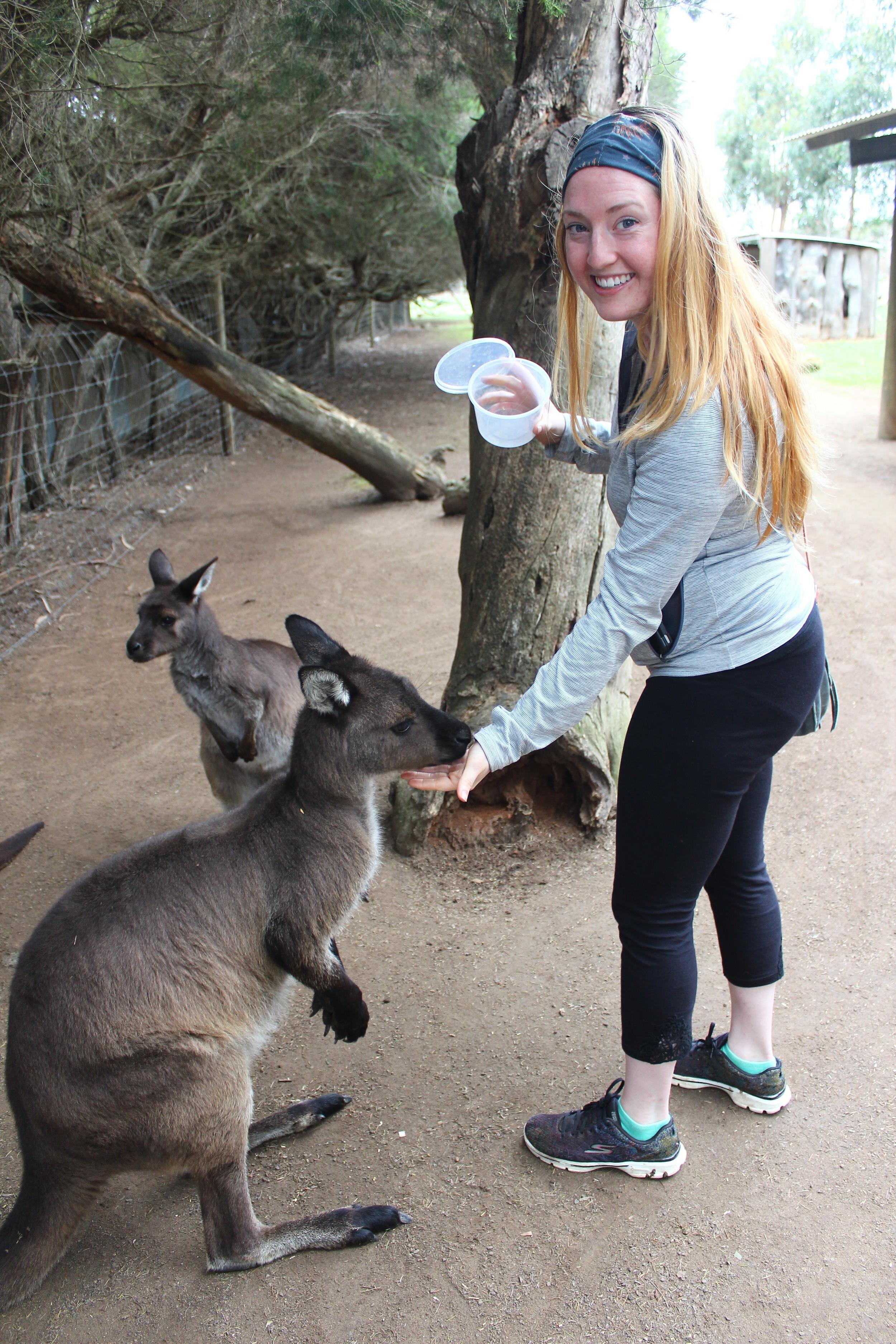 Me feeding a kangaroo!