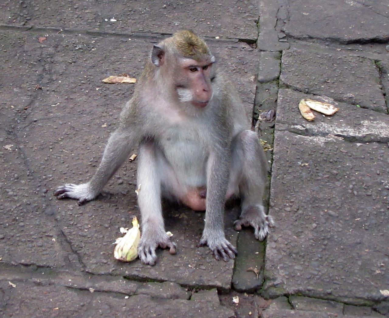 A Monkey Bum.