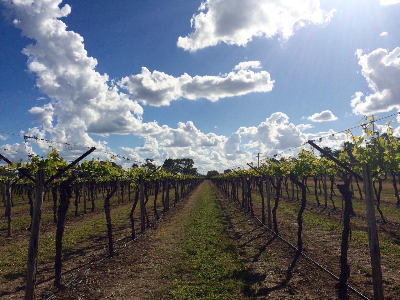 The vineyard.