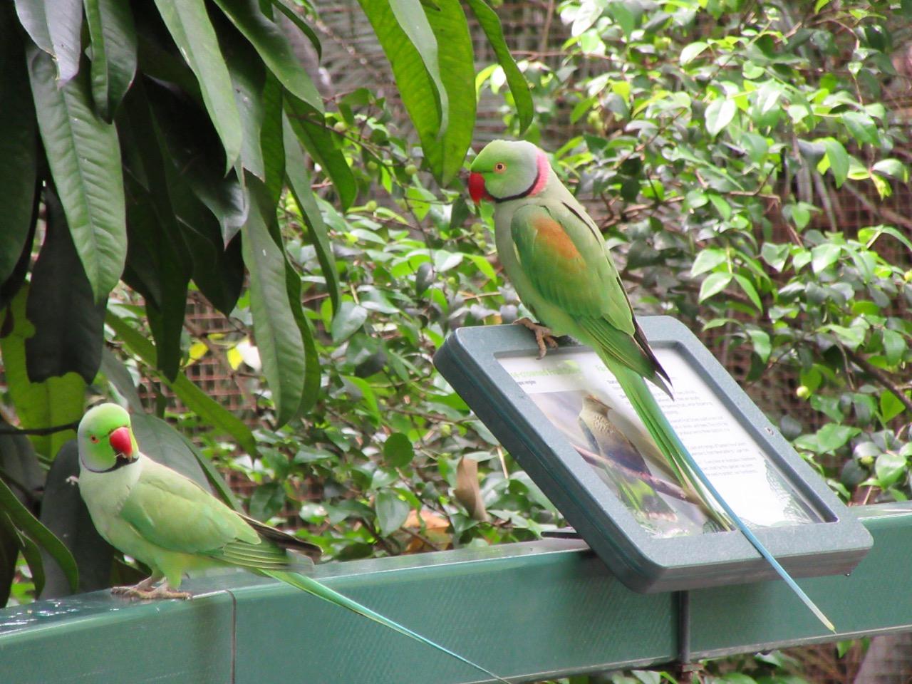 Parrots at the Rockhampton Zoo.