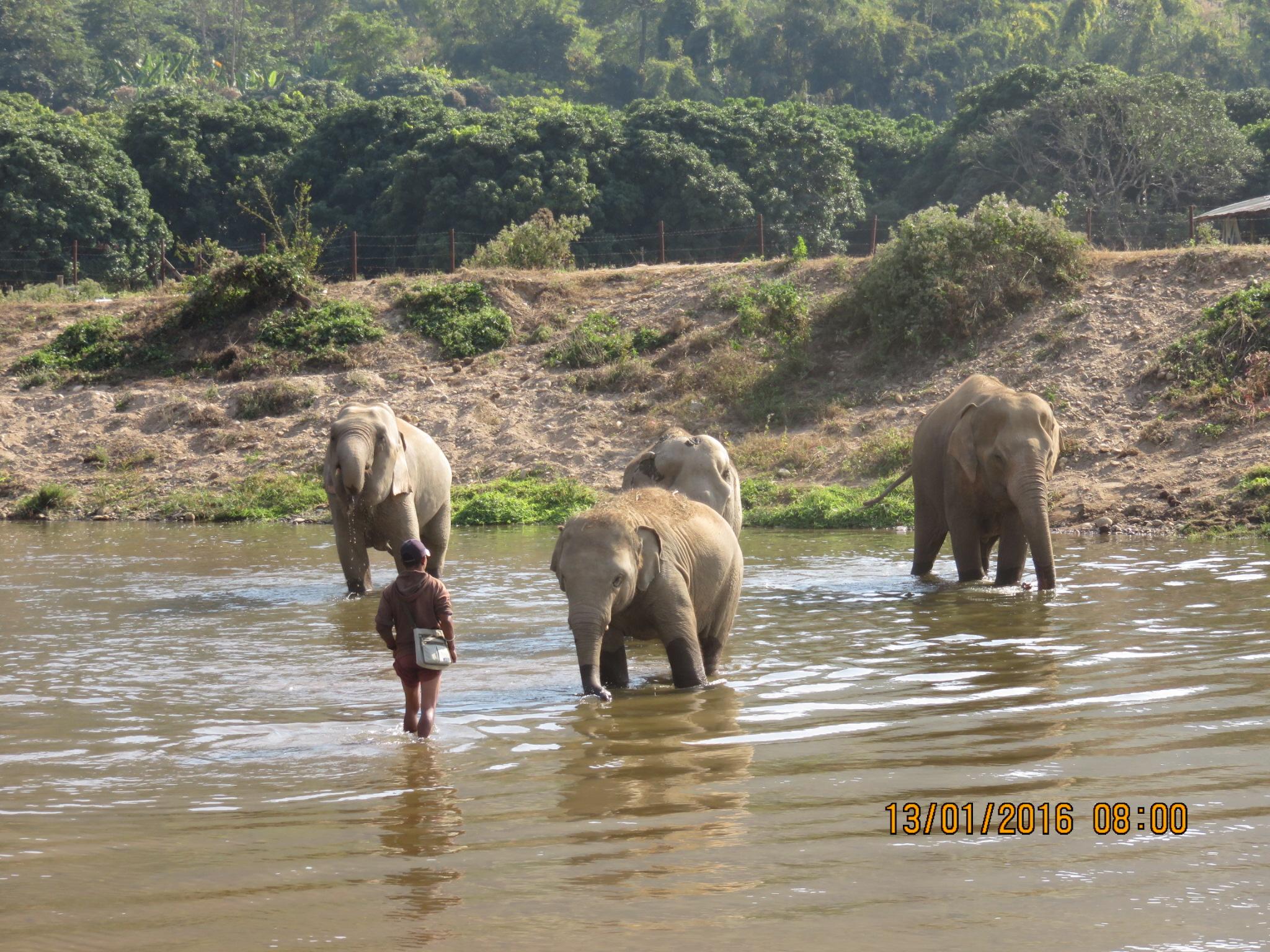 elephants-4.jpg
