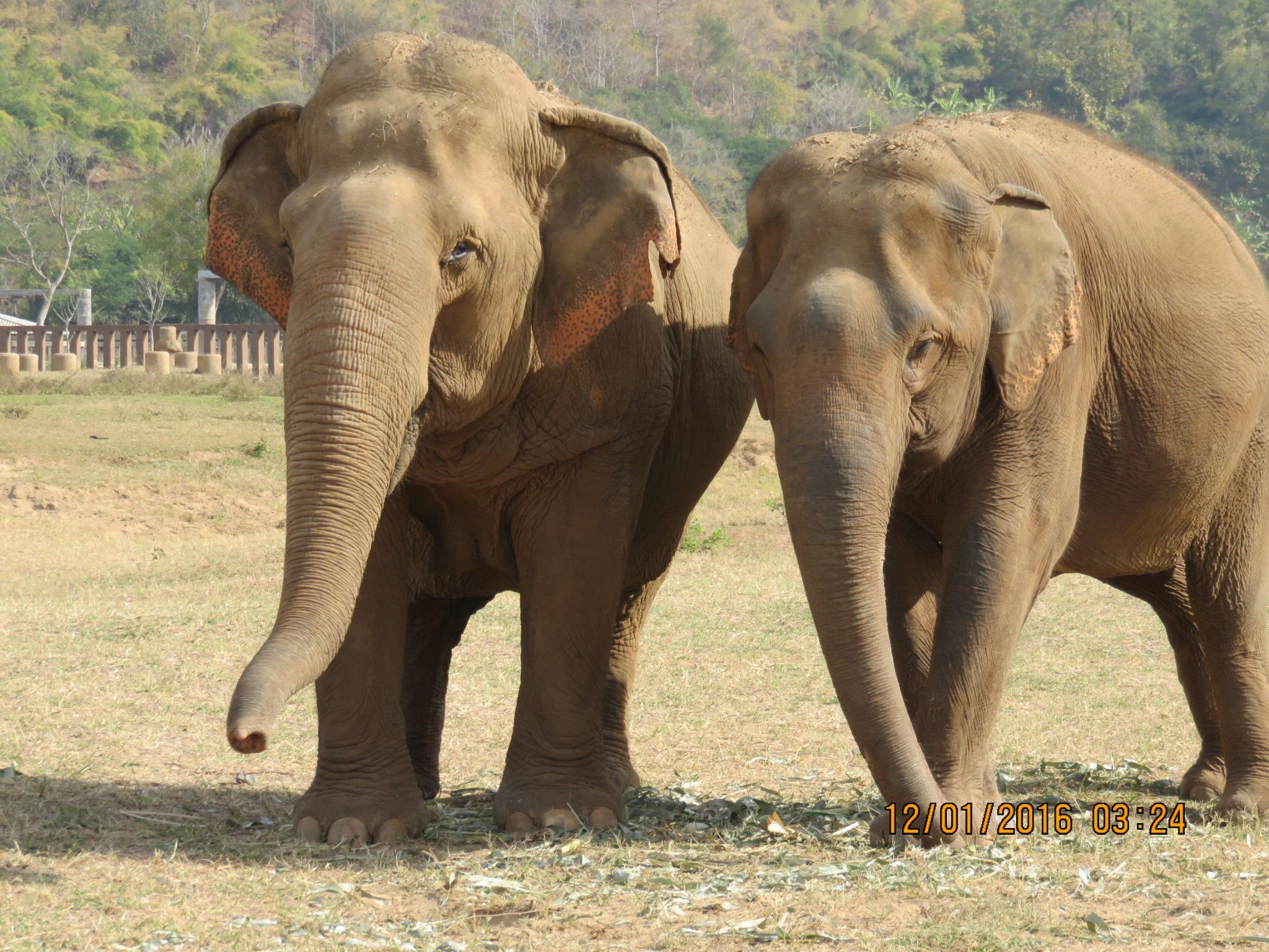 elephants-6.jpg
