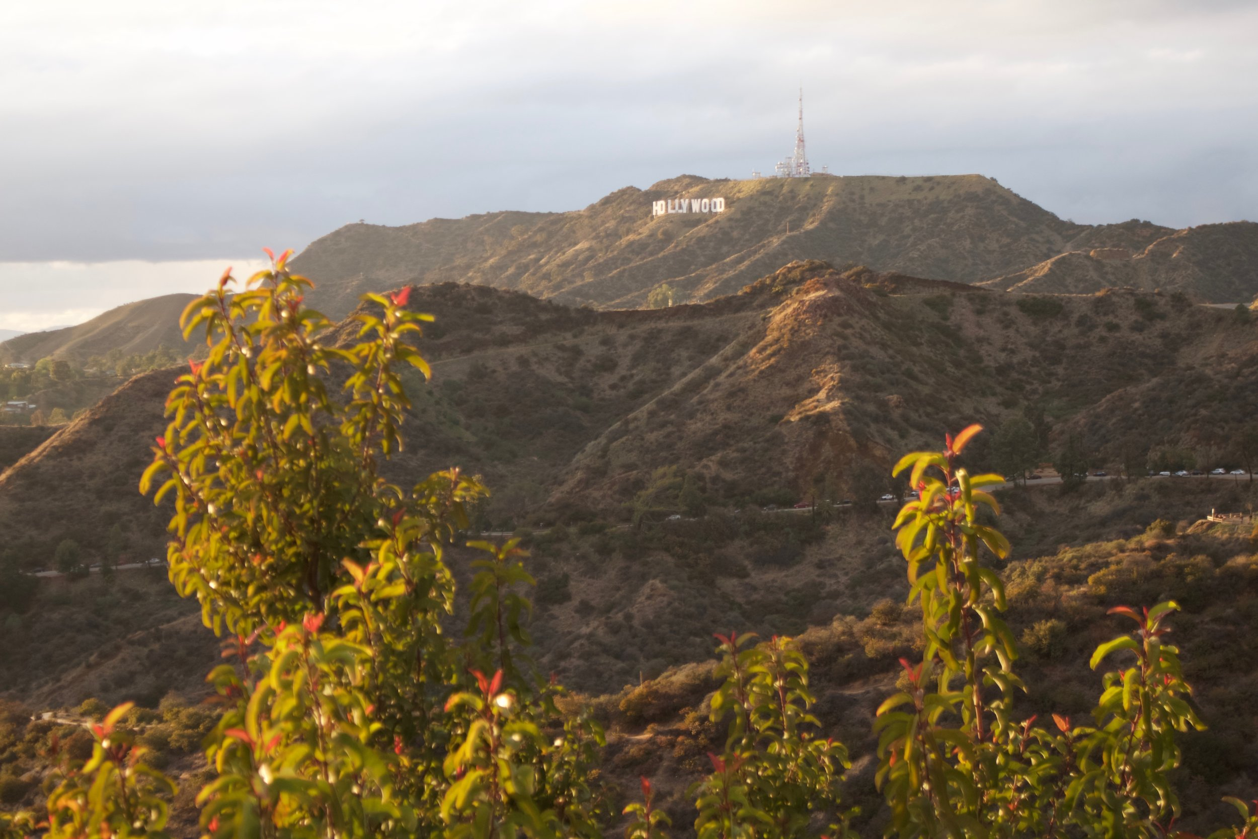 Hollywood Sign - View from Observatory