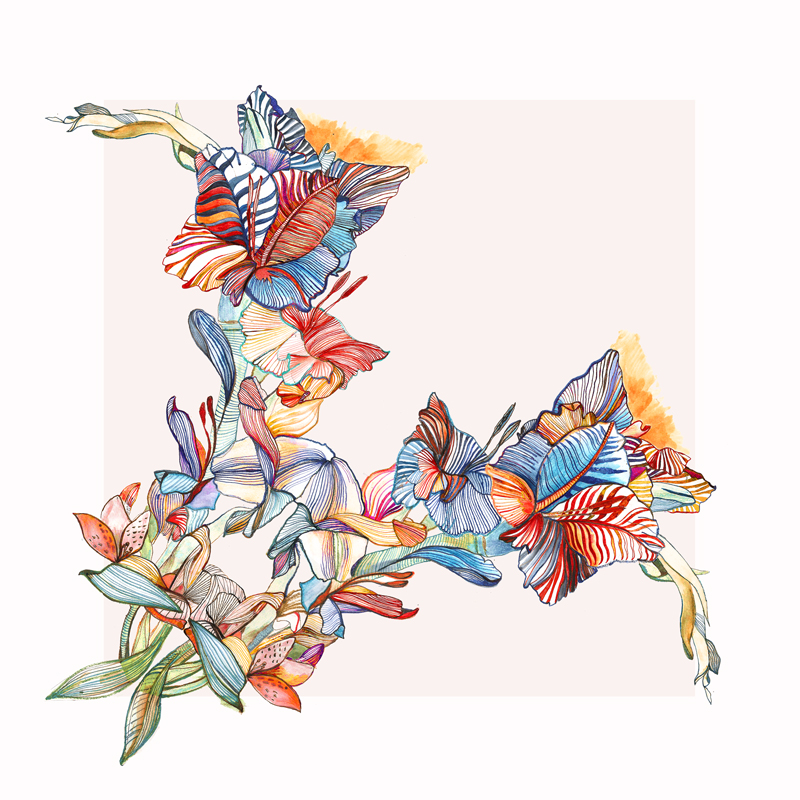 gladiolas bouquet illustration eleni malami