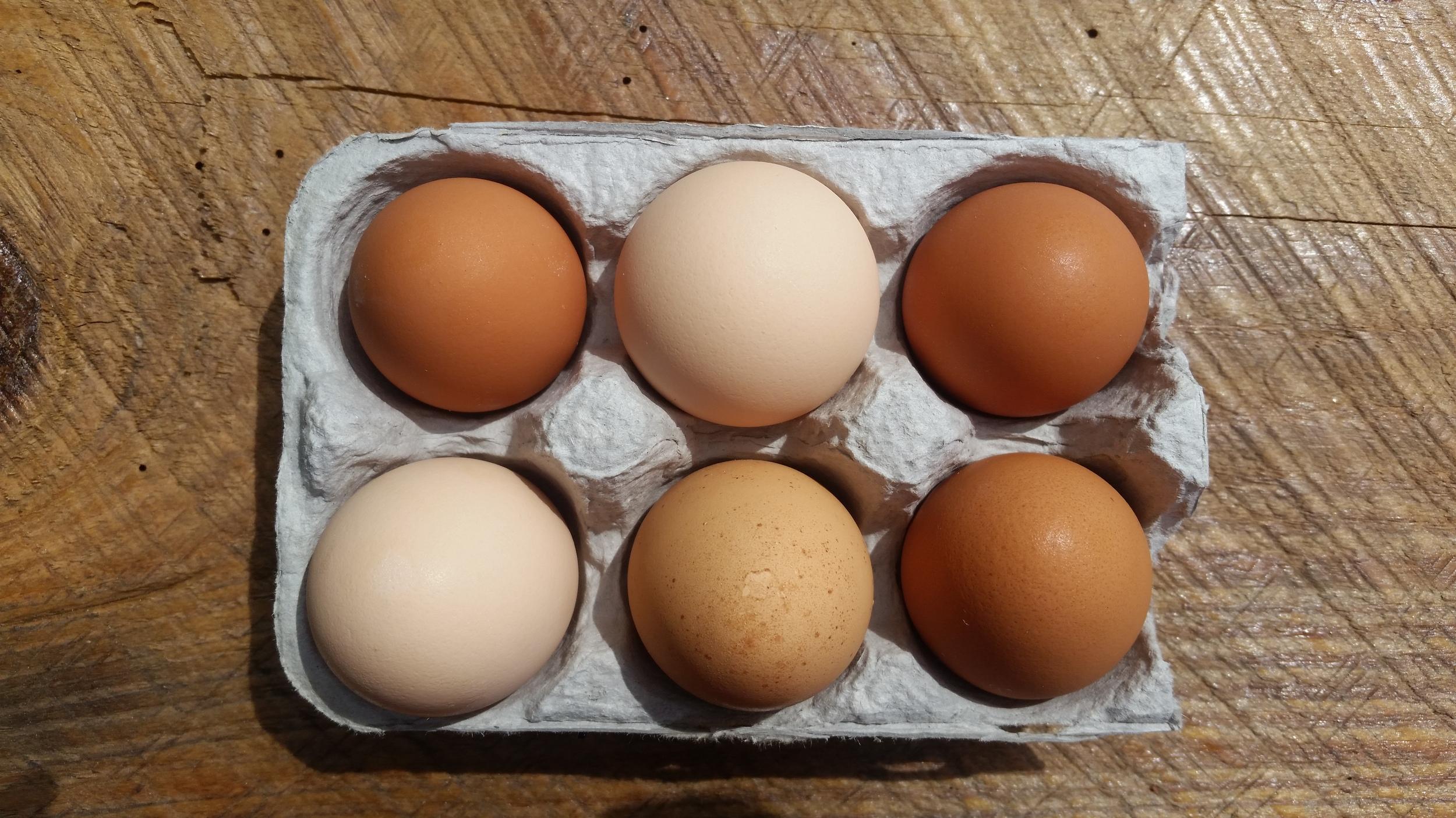 Fresh Eggs!!