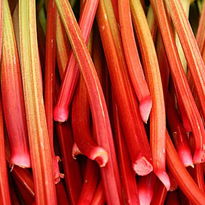 Rhubarb_PICTUREFB.png