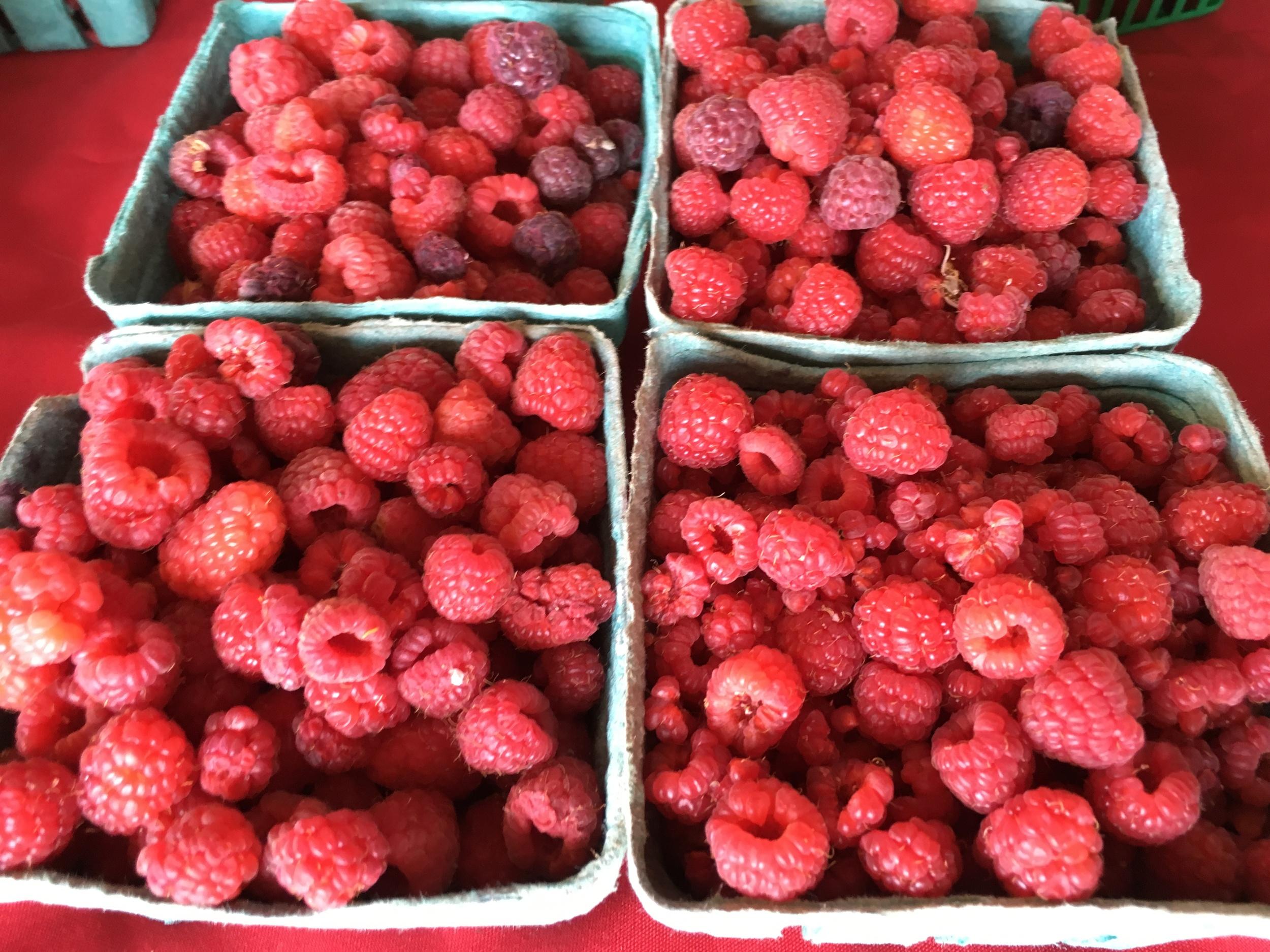 Raspberry Festival Recipes