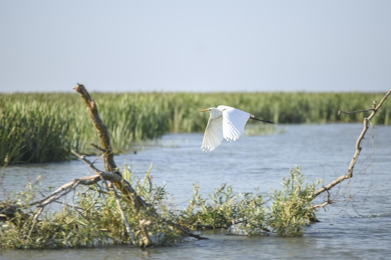 Danube Delta (13 of 43)@72.jpg