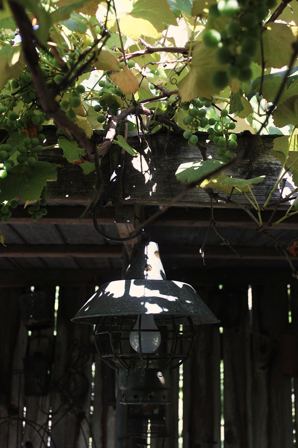 Lanterngarden.jpg