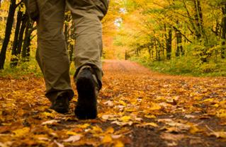 nature-walk-digestion.jpg