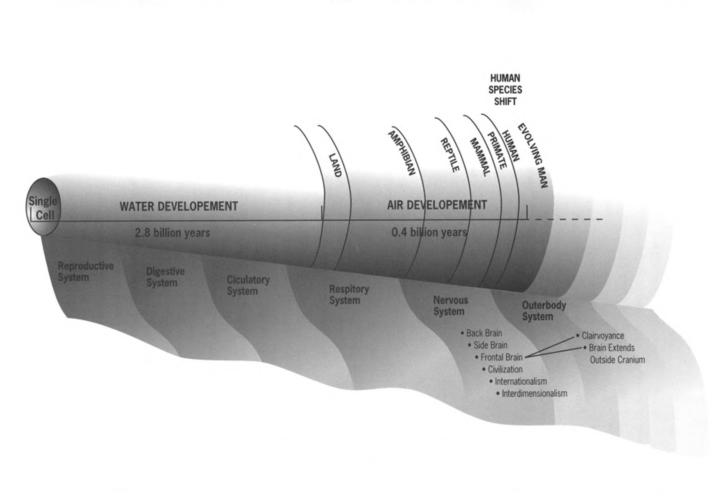 Development of the systems in evolution; the outerbody is now in a phase of rapid development.