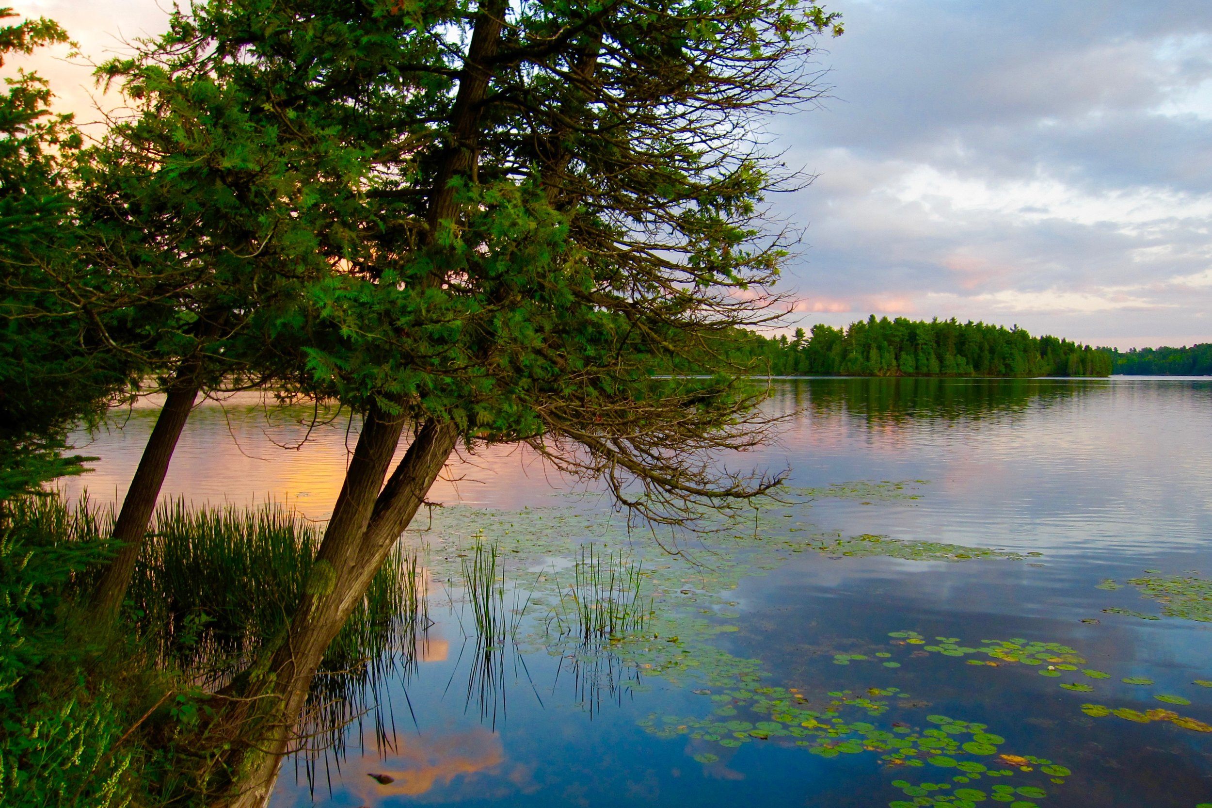 The wilderness of North Ontario