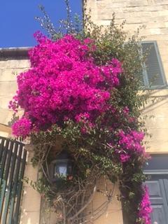 Gozo colour