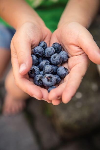blueberries small.jpg