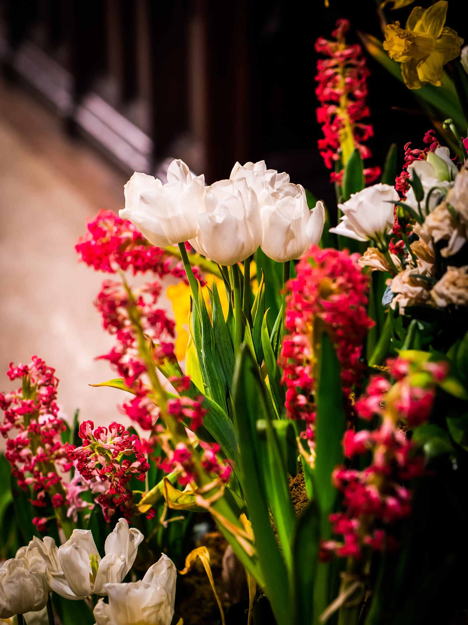 The Flowers of Saint Mary's  Photo by Ricardo Gomez