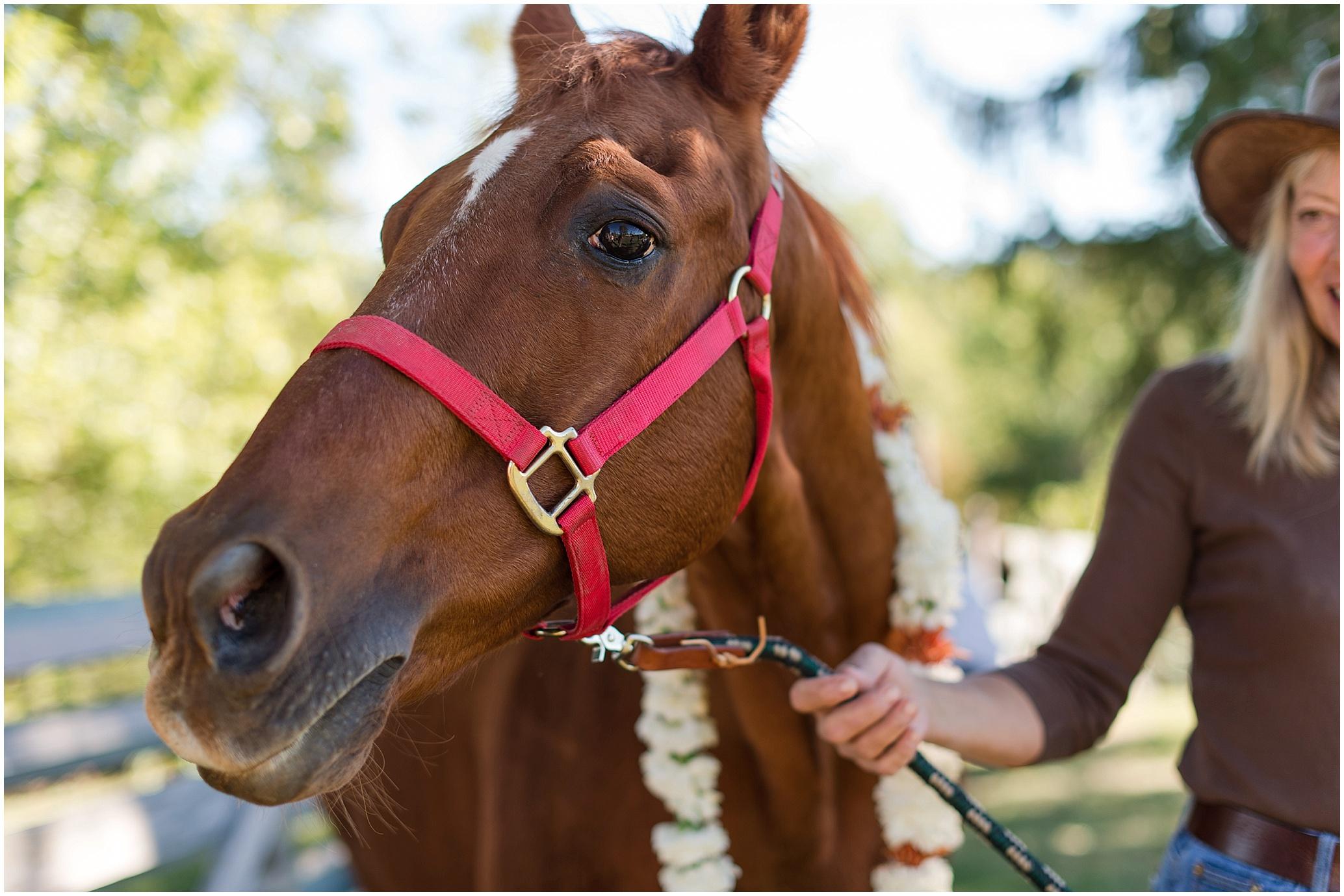 Hannah Leigh Photography Blue Hound Farm Wedding_1667.jpg