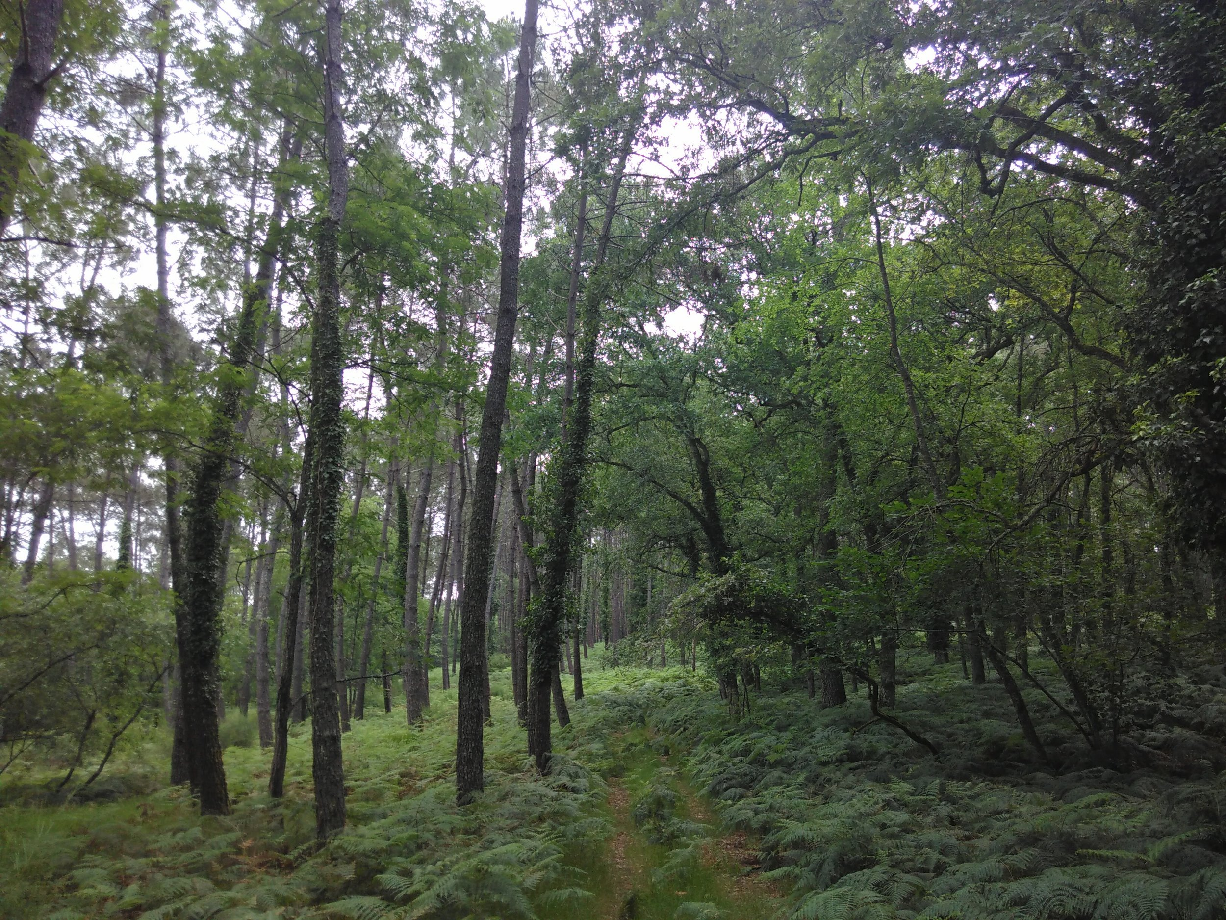 A forest walk can relieve stress and boost well-being.