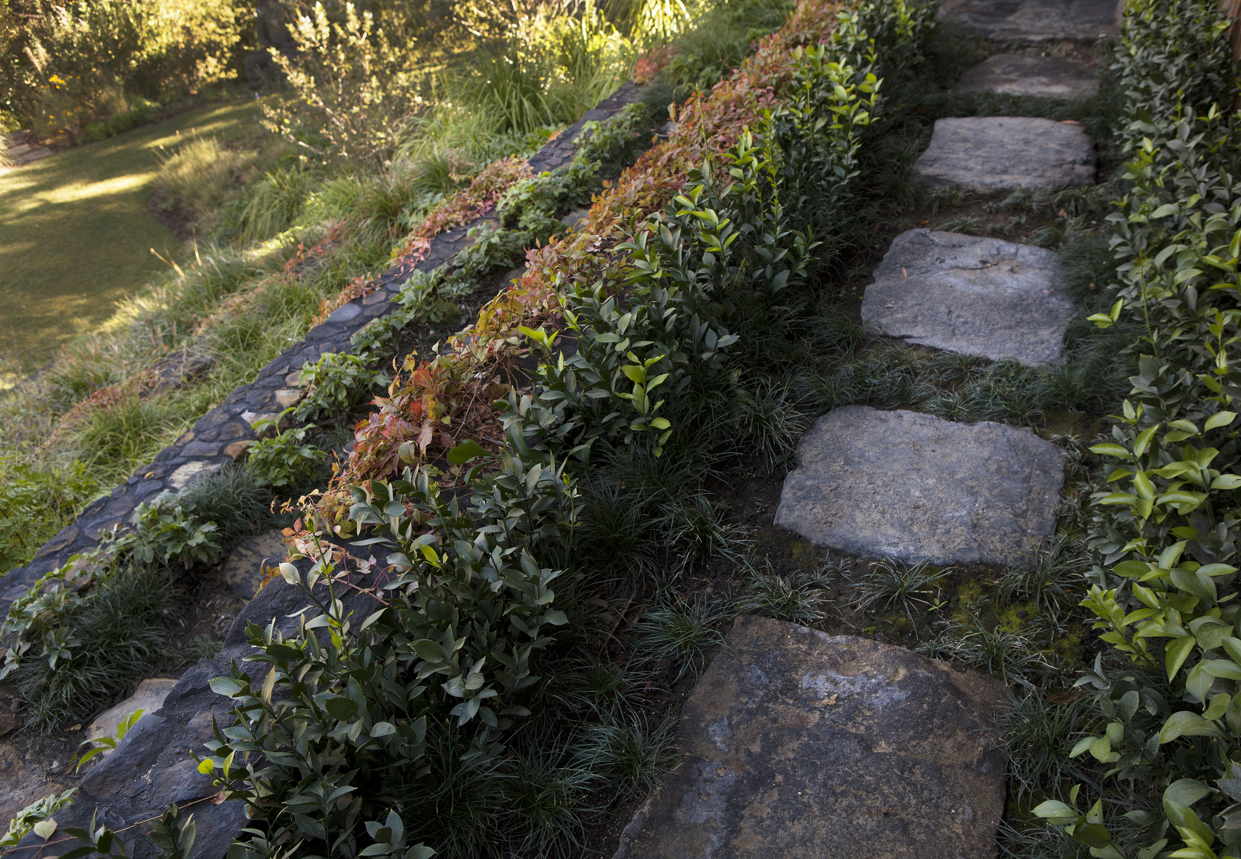 Terraced garden with custom designed split face boulder outdoor steps - Topanga Canyon - Los Angeles garden design by Campion Walker Landscapes