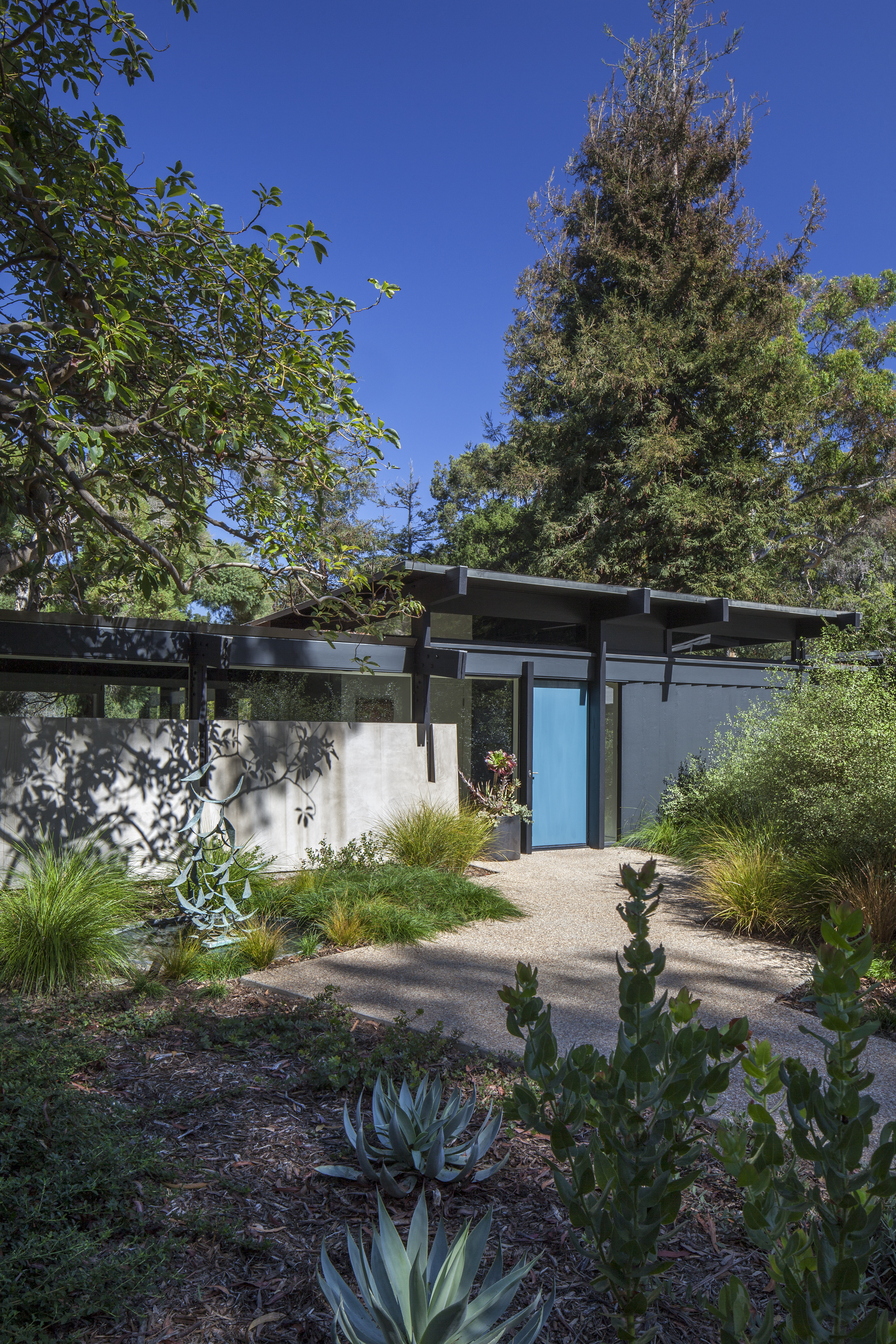 Modern home entryway with blue door - Rustic Canyon - Los Angeles garden design by Campion Walker Landscapes.jpg