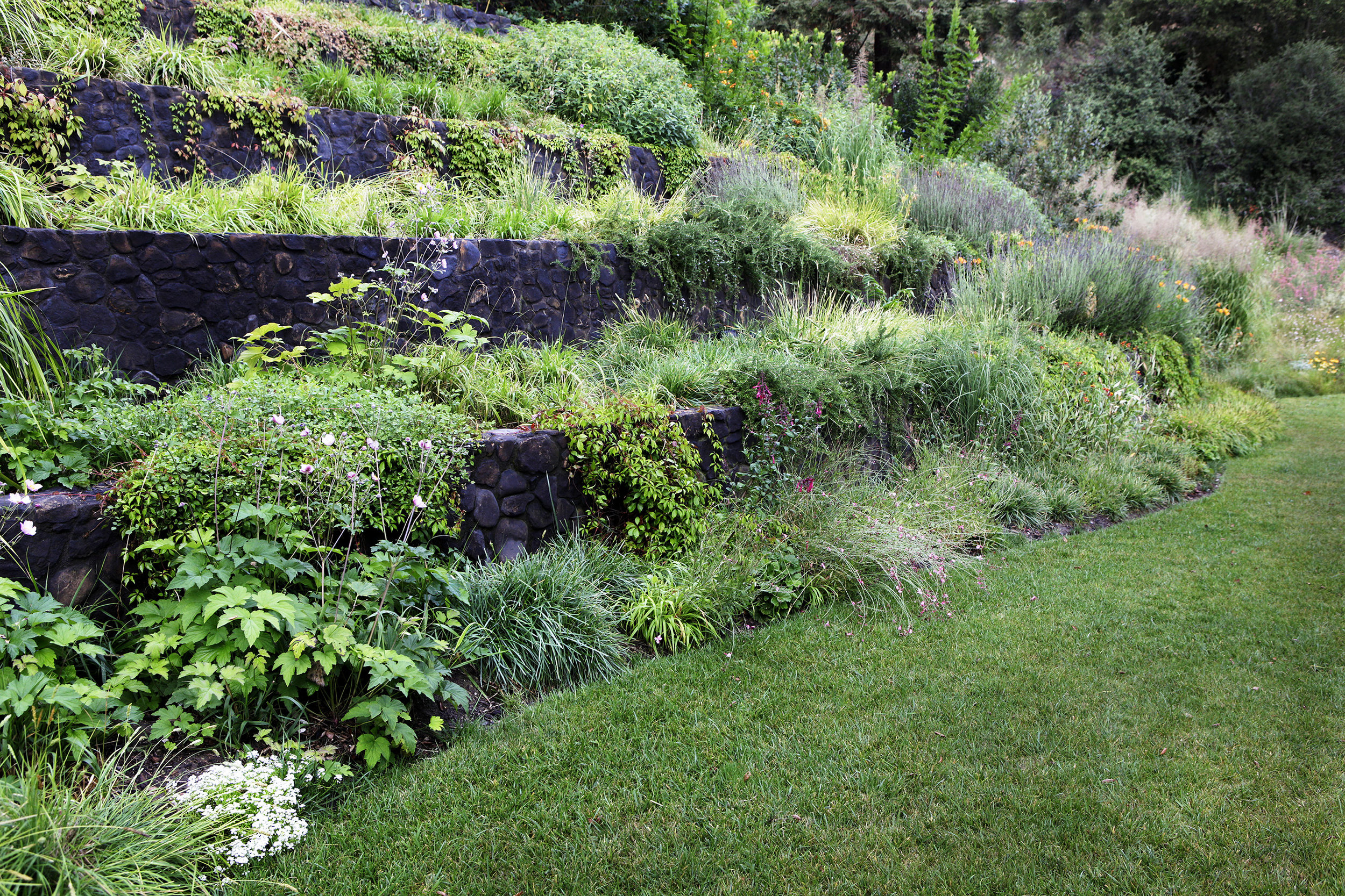 Terraced shade garden with stone retaining walls - Topanga Canyon - Los Angeles garden design by Campion Walker Landscapes