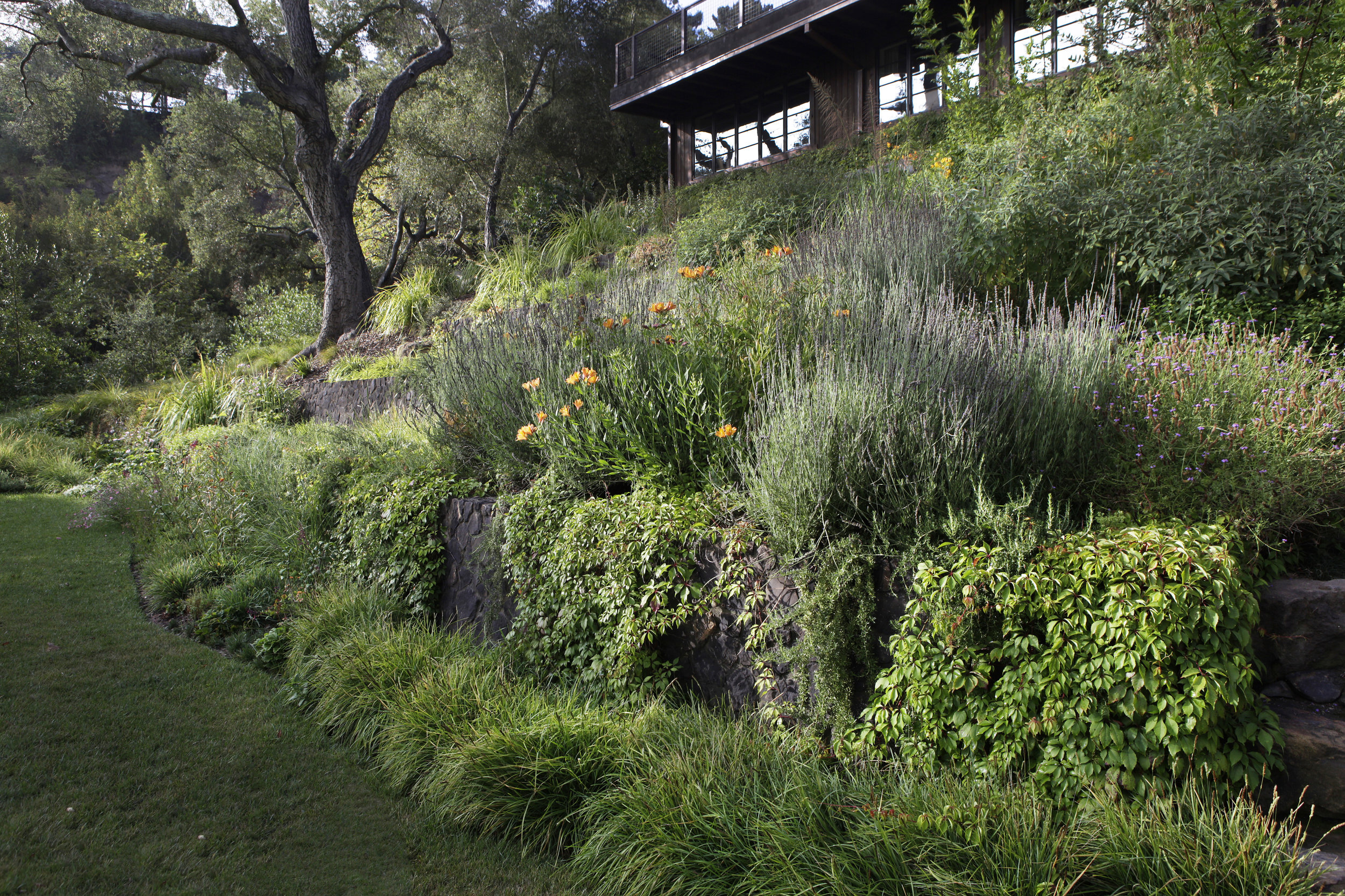 Hillside backyard garden with lavendar and grasses - Topanga Canyon - Los Angeles garden design by Campion Walker Landscapes
