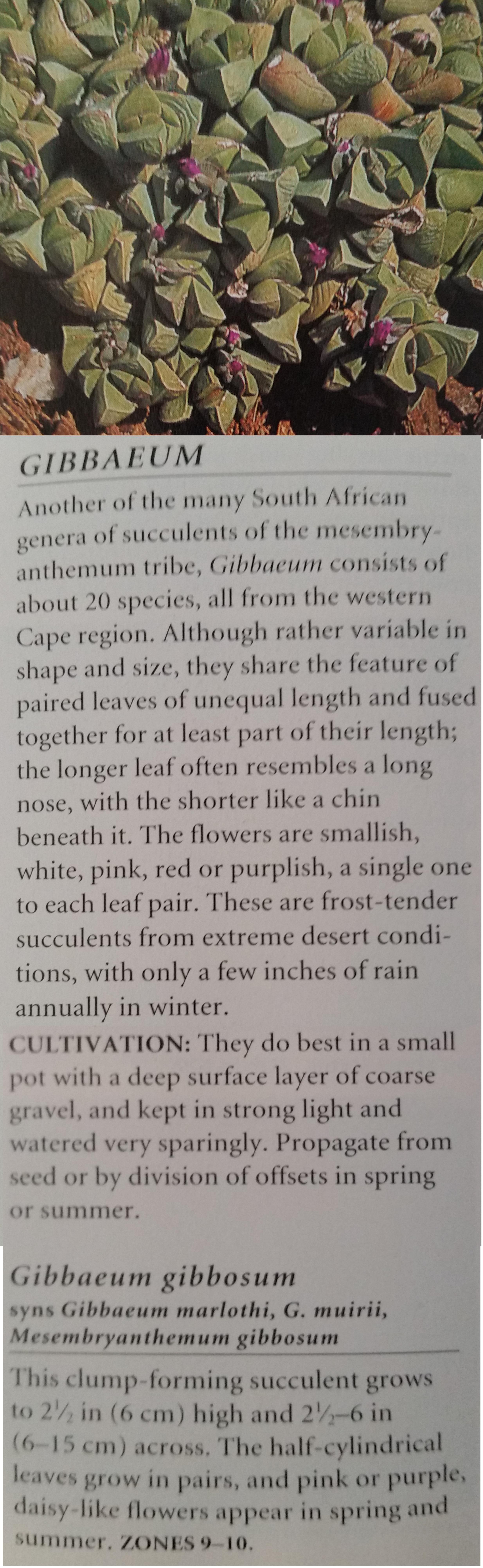 Gibbaeum gibbosum.png
