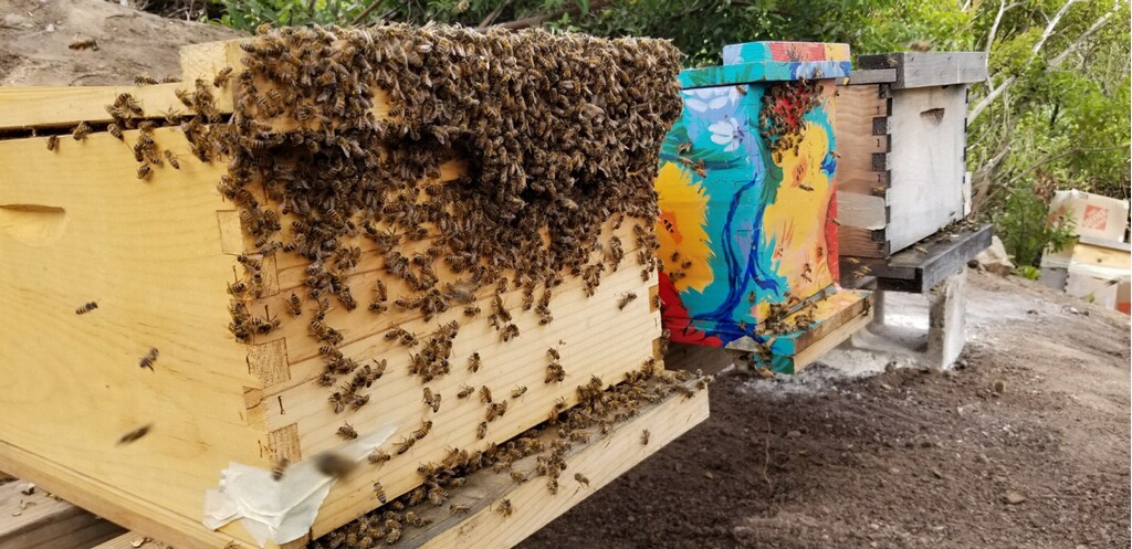 Campion Walker owner Nicholas Walker keeps several bee boxes himself and is always happy to talk to another bee-lover about his own challenges and triumphs