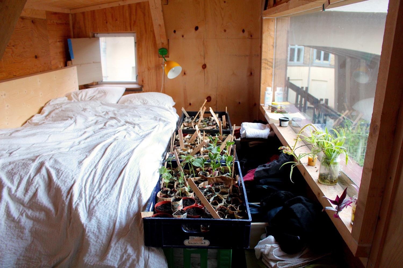 Growing seedlings in the atelier