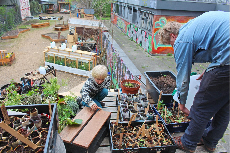 Watering the seedlings