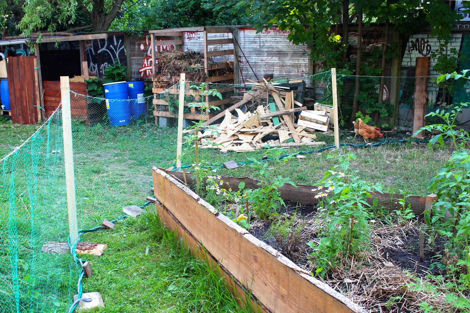 The manoeuverable chicken fence
