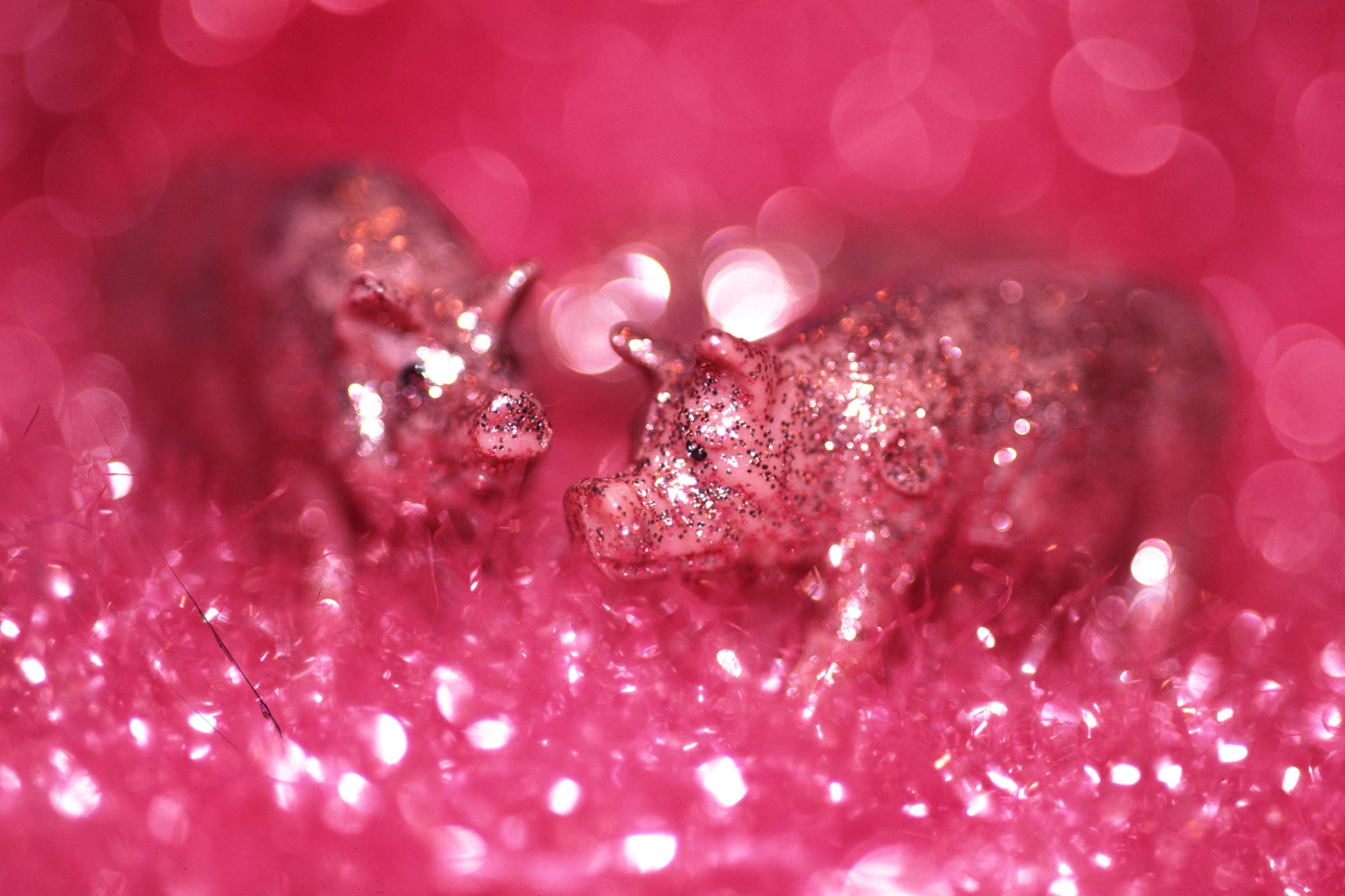 Sparkle-Pigs-.jpg