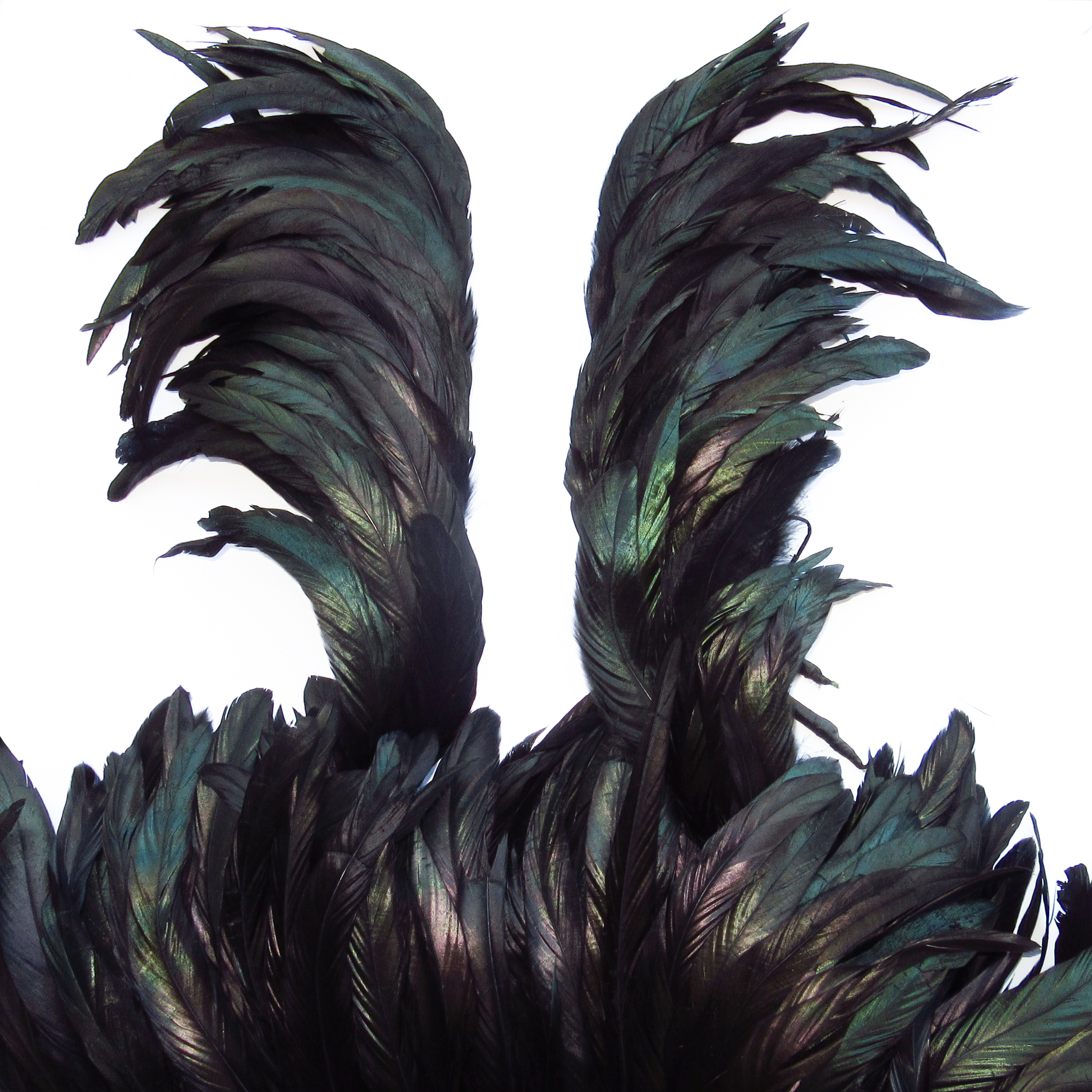 Plumes de coq