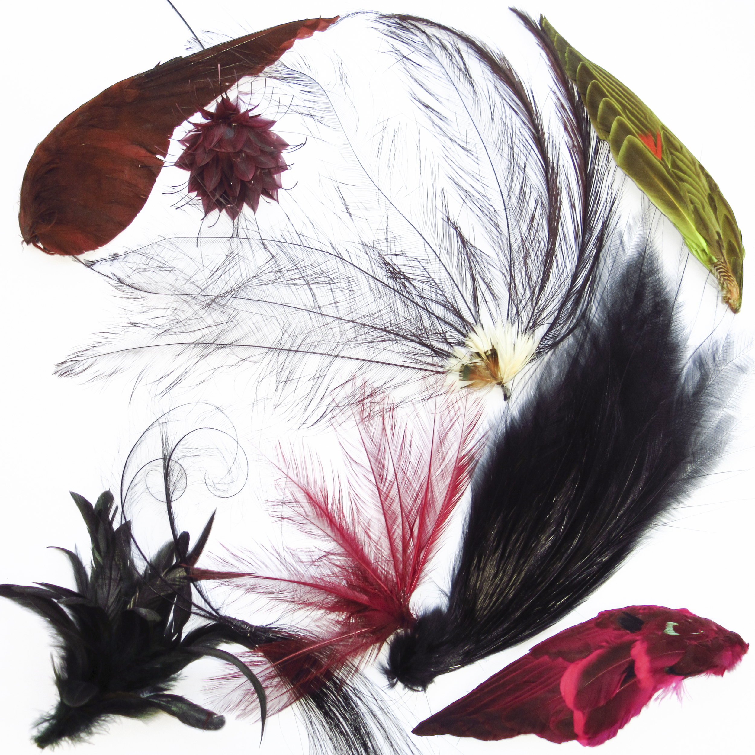 Aigrette feathers