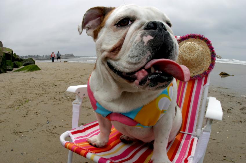 dog on spring break in minneapolis