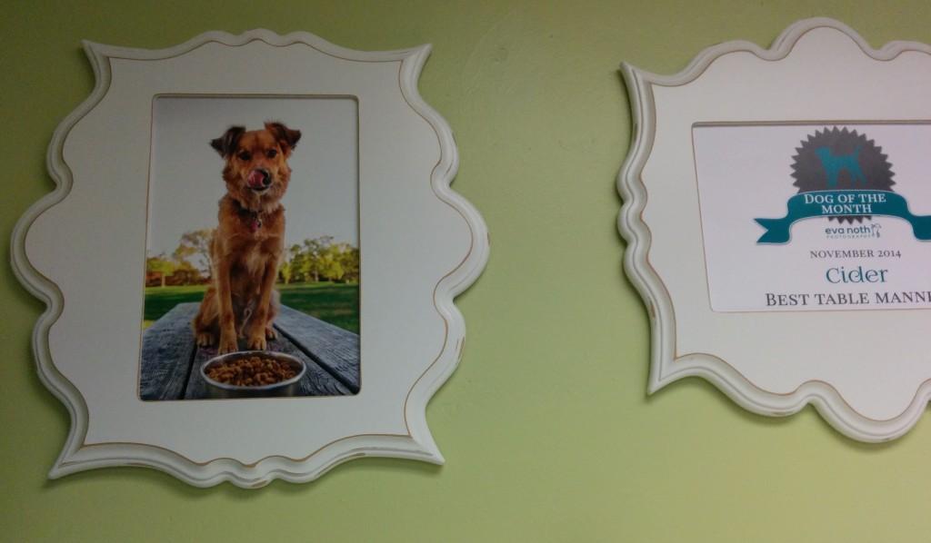 cider - dog daycare dog of the month