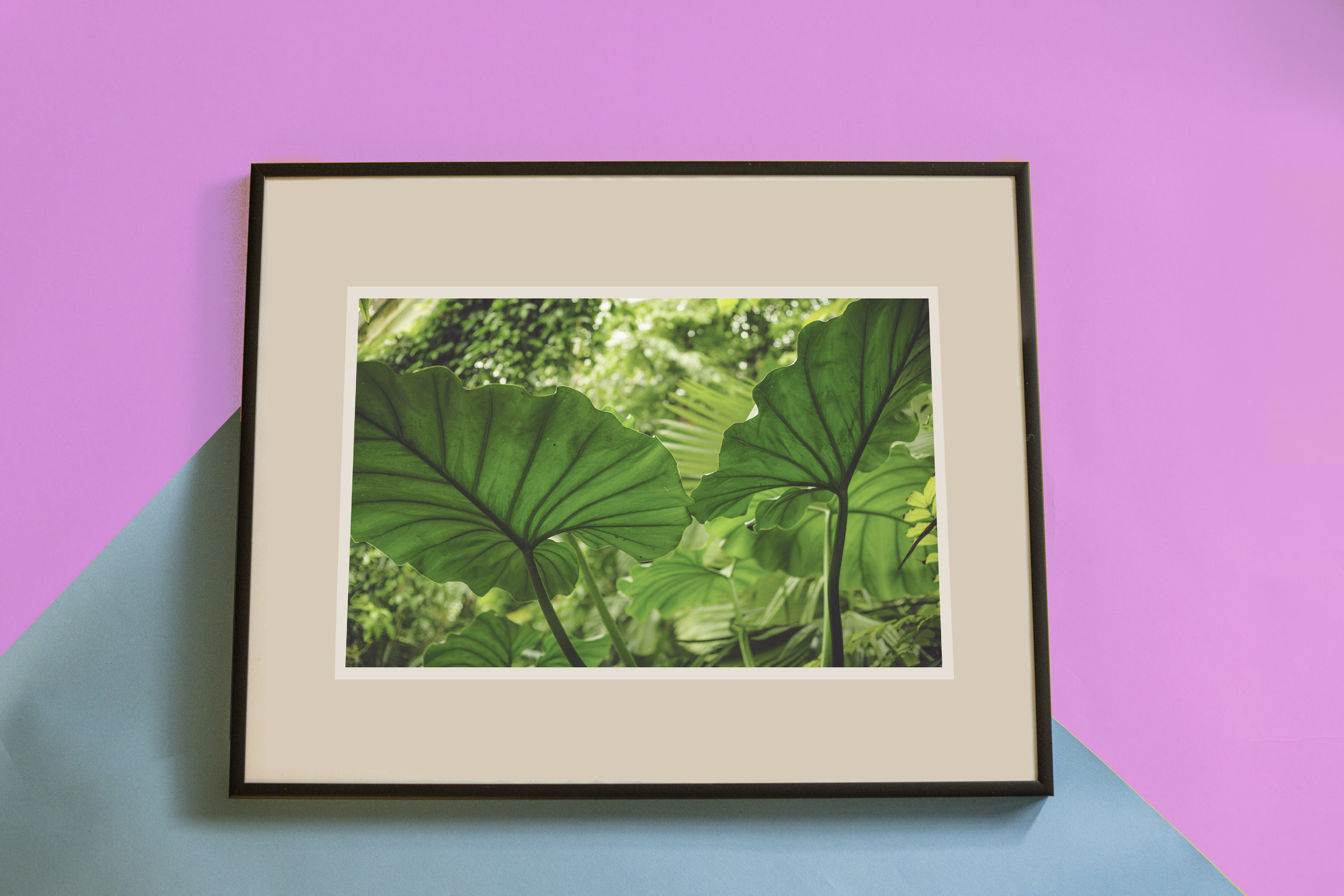 leafy fraser taylor.jpg