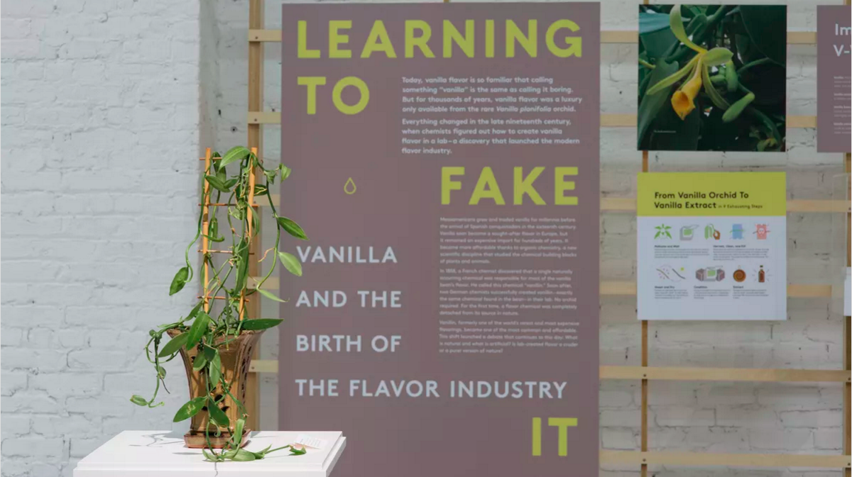 Inside MOFAD Lab: How Vanilla Went from a Tropical Rarity to Ubiquitous Flavoring